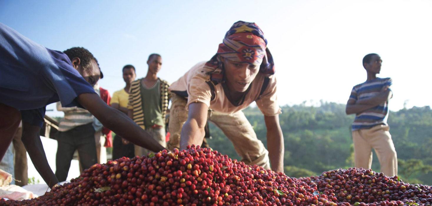 Ethiopian specialty coffee