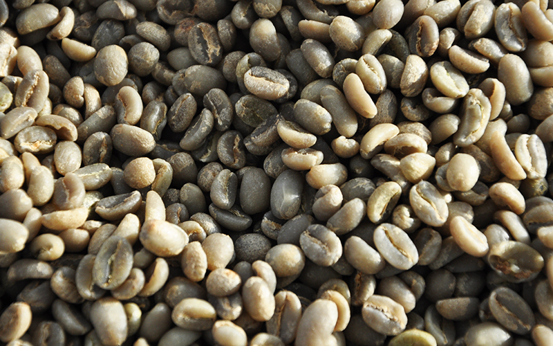 green coffee defects