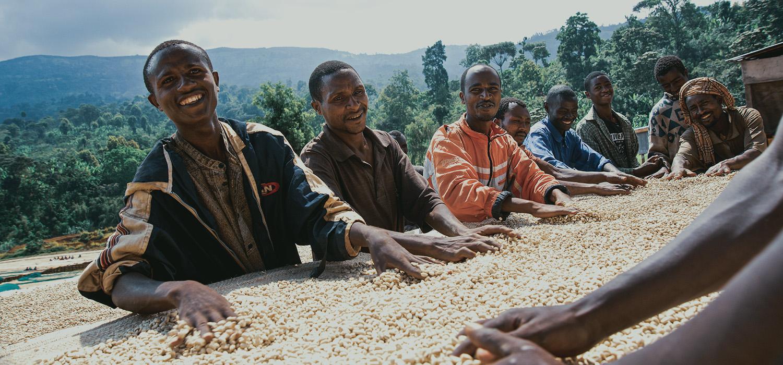 Coffee harvest calendar