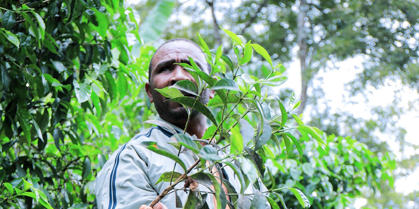 Alemayehu Daniel Farm