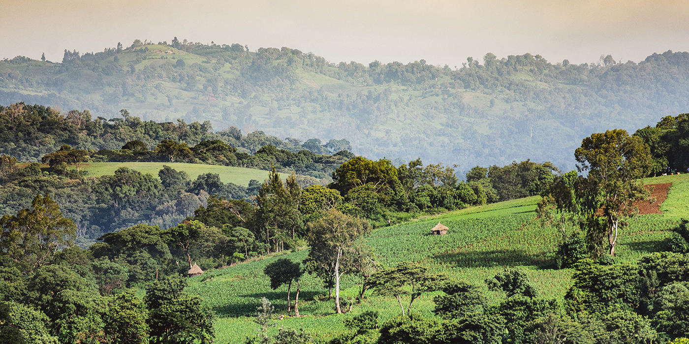 View from Debelo Cooperative Coffee Wet Mill
