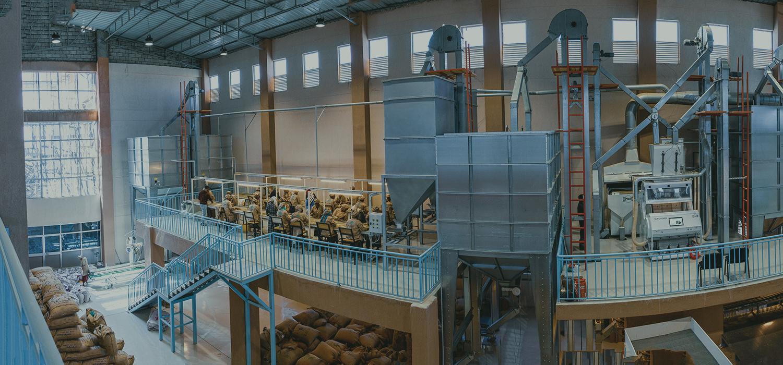 Coffee dry mill